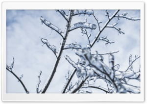 Branches Engulfed In Ice HD Wide Wallpaper for Widescreen