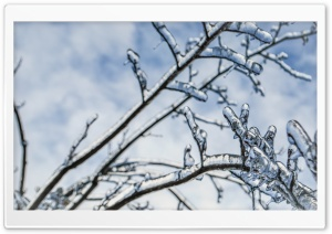 Branches Engulfed In Ice 2 HD Wide Wallpaper for Widescreen
