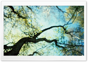 Branches Spring HD Wide Wallpaper for Widescreen