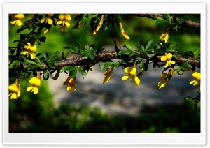 Branches With Yellow Flowers HD Wide Wallpaper for Widescreen