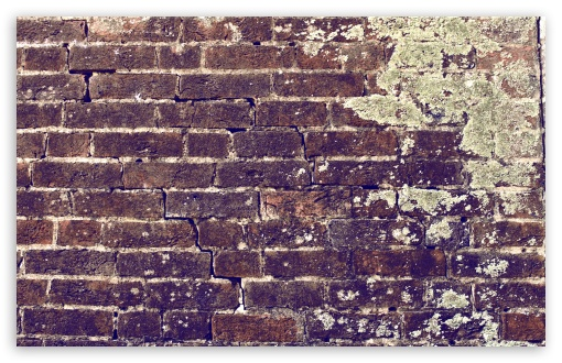 Brick Wall HD wallpaper for Wide 16:10 5:3 Widescreen WHXGA WQXGA WUXGA WXGA WGA ; HD 16:9 High Definition WQHD QWXGA 1080p 900p 720p QHD nHD ; UHD 16:9 WQHD QWXGA 1080p 900p 720p QHD nHD ; Standard 4:3 5:4 3:2 Fullscreen UXGA XGA SVGA QSXGA SXGA DVGA HVGA HQVGA devices ( Apple PowerBook G4 iPhone 4 3G 3GS iPod Touch ) ; Tablet 1:1 ; iPad 1/2/Mini ; Mobile 4:3 5:3 3:2 16:9 5:4 - UXGA XGA SVGA WGA DVGA HVGA HQVGA devices ( Apple PowerBook G4 iPhone 4 3G 3GS iPod Touch ) WQHD QWXGA 1080p 900p 720p QHD nHD QSXGA SXGA ; Dual 16:10 5:3 16:9 4:3 5:4 WHXGA WQXGA WUXGA WXGA WGA WQHD QWXGA 1080p 900p 720p QHD nHD UXGA XGA SVGA QSXGA SXGA ;