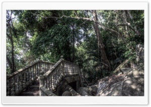 Bridge in a Forest HDR HD Wide Wallpaper for 4K UHD Widescreen desktop & smartphone
