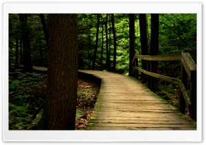 Bridge in the Wood HD Wide Wallpaper for Widescreen