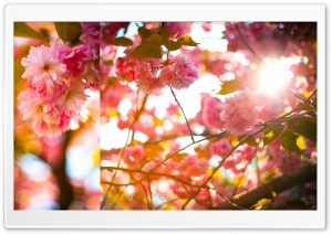 Bright And Cheery HD Wide Wallpaper for Widescreen