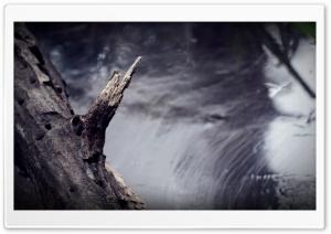 Broken Branch HD Wide Wallpaper for 4K UHD Widescreen desktop & smartphone