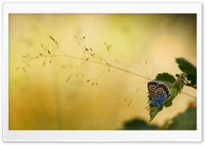 Brown and Blue Butterfly HD Wide Wallpaper for Widescreen