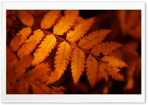 Brown Autumn Leaf 3 HD Wide Wallpaper for Widescreen
