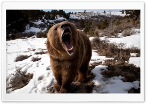 Brown Bear Roaring HD Wide Wallpaper for Widescreen