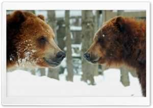 Brown Bears Couple HD Wide Wallpaper for Widescreen