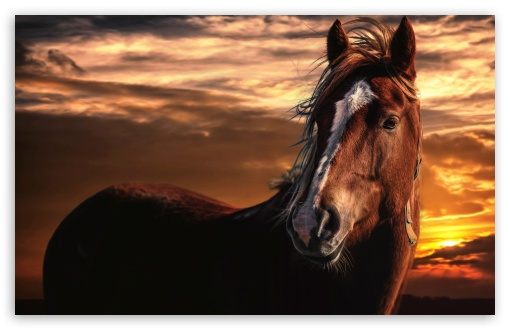 Brown Horse with White Stripe on Face ❤ 4K UHD Wallpaper for Wide 16:10 5:3 Widescreen WHXGA WQXGA WUXGA WXGA WGA ; 4K UHD 16:9 Ultra High Definition 2160p 1440p 1080p 900p 720p ; UHD 16:9 2160p 1440p 1080p 900p 720p ; Standard 4:3 5:4 3:2 Fullscreen UXGA XGA SVGA QSXGA SXGA DVGA HVGA HQVGA ( Apple PowerBook G4 iPhone 4 3G 3GS iPod Touch ) ; Smartphone 16:9 3:2 5:3 2160p 1440p 1080p 900p 720p DVGA HVGA HQVGA ( Apple PowerBook G4 iPhone 4 3G 3GS iPod Touch ) WGA ; Tablet 1:1 ; iPad 1/2/Mini ; Mobile 4:3 5:3 3:2 16:9 5:4 - UXGA XGA SVGA WGA DVGA HVGA HQVGA ( Apple PowerBook G4 iPhone 4 3G 3GS iPod Touch ) 2160p 1440p 1080p 900p 720p QSXGA SXGA ;