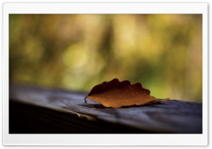 Brown Leaf Mcaro HD Wide Wallpaper for Widescreen