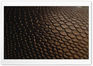 Brown Leather HD Wide Wallpaper for Widescreen