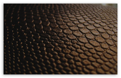Brown Leather ❤ 4K UHD Wallpaper for Wide 16:10 5:3 Widescreen WHXGA WQXGA WUXGA WXGA WGA ; 4K UHD 16:9 Ultra High Definition 2160p 1440p 1080p 900p 720p ; Standard 4:3 5:4 3:2 Fullscreen UXGA XGA SVGA QSXGA SXGA DVGA HVGA HQVGA ( Apple PowerBook G4 iPhone 4 3G 3GS iPod Touch ) ; Tablet 1:1 ; iPad 1/2/Mini ; Mobile 4:3 5:3 3:2 16:9 5:4 - UXGA XGA SVGA WGA DVGA HVGA HQVGA ( Apple PowerBook G4 iPhone 4 3G 3GS iPod Touch ) 2160p 1440p 1080p 900p 720p QSXGA SXGA ; Dual 16:10 5:3 16:9 4:3 5:4 WHXGA WQXGA WUXGA WXGA WGA 2160p 1440p 1080p 900p 720p UXGA XGA SVGA QSXGA SXGA ;