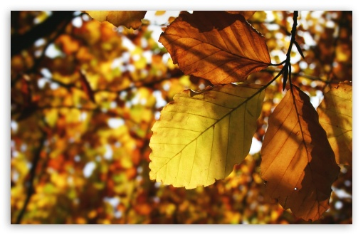 Brown Leaves HD wallpaper for Wide 16:10 5:3 Widescreen WHXGA WQXGA WUXGA WXGA WGA ; HD 16:9 High Definition WQHD QWXGA 1080p 900p 720p QHD nHD ; Standard 4:3 5:4 3:2 Fullscreen UXGA XGA SVGA QSXGA SXGA DVGA HVGA HQVGA devices ( Apple PowerBook G4 iPhone 4 3G 3GS iPod Touch ) ; Tablet 1:1 ; iPad 1/2/Mini ; Mobile 4:3 5:3 3:2 16:9 5:4 - UXGA XGA SVGA WGA DVGA HVGA HQVGA devices ( Apple PowerBook G4 iPhone 4 3G 3GS iPod Touch ) WQHD QWXGA 1080p 900p 720p QHD nHD QSXGA SXGA ;