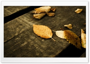 Brown Leaves Ultra HD Wallpaper for 4K UHD Widescreen desktop, tablet & smartphone