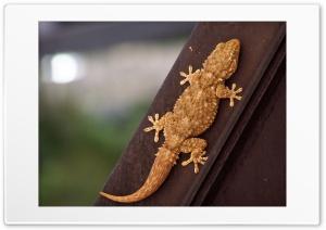 Brown Lizard Ultra HD Wallpaper for 4K UHD Widescreen desktop, tablet & smartphone