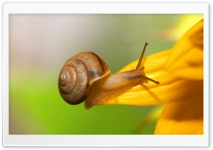 Brown Snail HD Wide Wallpaper for Widescreen