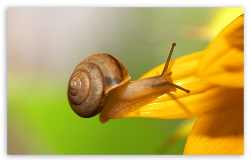Brown Snail HD wallpaper for Wide 16:10 5:3 Widescreen WHXGA WQXGA WUXGA WXGA WGA ; HD 16:9 High Definition WQHD QWXGA 1080p 900p 720p QHD nHD ; Standard 4:3 5:4 3:2 Fullscreen UXGA XGA SVGA QSXGA SXGA DVGA HVGA HQVGA devices ( Apple PowerBook G4 iPhone 4 3G 3GS iPod Touch ) ; Tablet 1:1 ; iPad 1/2/Mini ; Mobile 4:3 5:3 3:2 16:9 5:4 - UXGA XGA SVGA WGA DVGA HVGA HQVGA devices ( Apple PowerBook G4 iPhone 4 3G 3GS iPod Touch ) WQHD QWXGA 1080p 900p 720p QHD nHD QSXGA SXGA ;