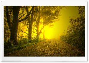 Brumas da Manha - Morning Mists Ultra HD Wallpaper for 4K UHD Widescreen desktop, tablet & smartphone