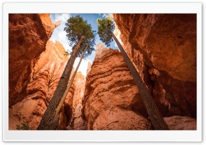 Bryce Canyon Utah HD Wide Wallpaper for Widescreen
