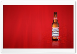 Budweiser HD Wide Wallpaper for Widescreen