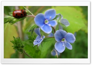 Bug And Blue Flower Ultra HD Wallpaper for 4K UHD Widescreen desktop, tablet & smartphone