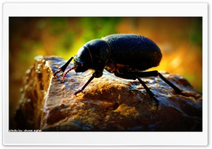 Bug Macro HD Wide Wallpaper for Widescreen