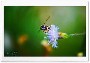 Bug on Fower HD Wide Wallpaper for 4K UHD Widescreen desktop & smartphone