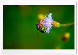 Bug on White Flower HD Wide Wallpaper for 4K UHD Widescreen desktop & smartphone