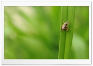 Bug Walking On Leaf Ultra HD Wallpaper for 4K UHD Widescreen desktop, tablet & smartphone