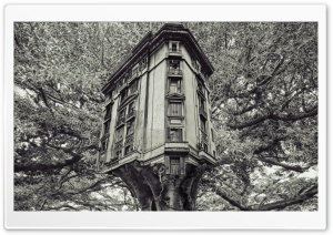 Building In A Tree HD Wide Wallpaper for Widescreen
