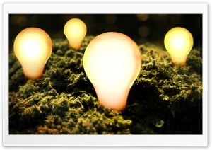 Bulbs Lit HD Wide Wallpaper for Widescreen