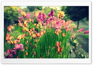 Bunch of Flowers HD Wide Wallpaper for Widescreen