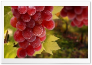 Bunch Of Grapes HD Wide Wallpaper for Widescreen