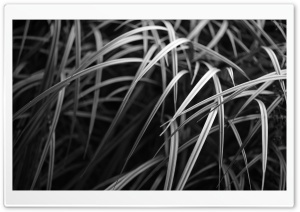 Burnaby Grass HD Wide Wallpaper for Widescreen