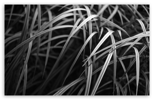 Burnaby Grass HD wallpaper for Wide 16:10 5:3 Widescreen WHXGA WQXGA WUXGA WXGA WGA ; HD 16:9 High Definition WQHD QWXGA 1080p 900p 720p QHD nHD ; UHD 16:9 WQHD QWXGA 1080p 900p 720p QHD nHD ; Standard 4:3 5:4 3:2 Fullscreen UXGA XGA SVGA QSXGA SXGA DVGA HVGA HQVGA devices ( Apple PowerBook G4 iPhone 4 3G 3GS iPod Touch ) ; Tablet 1:1 ; iPad 1/2/Mini ; Mobile 4:3 5:3 3:2 16:9 5:4 - UXGA XGA SVGA WGA DVGA HVGA HQVGA devices ( Apple PowerBook G4 iPhone 4 3G 3GS iPod Touch ) WQHD QWXGA 1080p 900p 720p QHD nHD QSXGA SXGA ;