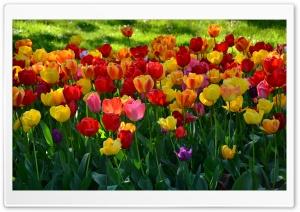 Bursting Into Spring Ultra HD Wallpaper for 4K UHD Widescreen desktop, tablet & smartphone