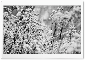 Bushes In Winter HD Wide Wallpaper for Widescreen
