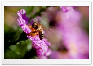 Busy Bee HD Wide Wallpaper for Widescreen