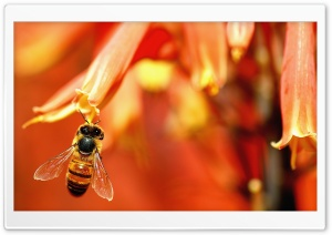 Busy Bee Working HD Wide Wallpaper for 4K UHD Widescreen desktop & smartphone