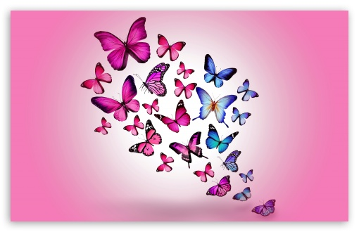 Butterflies ❤ 4K UHD Wallpaper for Wide 16:10 5:3 Widescreen WHXGA WQXGA WUXGA WXGA WGA ; 4K UHD 16:9 Ultra High Definition 2160p 1440p 1080p 900p 720p ; UHD 16:9 2160p 1440p 1080p 900p 720p ; Standard 4:3 5:4 3:2 Fullscreen UXGA XGA SVGA QSXGA SXGA DVGA HVGA HQVGA ( Apple PowerBook G4 iPhone 4 3G 3GS iPod Touch ) ; Tablet 1:1 ; iPad 1/2/Mini ; Mobile 4:3 5:3 3:2 5:4 - UXGA XGA SVGA WGA DVGA HVGA HQVGA ( Apple PowerBook G4 iPhone 4 3G 3GS iPod Touch ) QSXGA SXGA ;