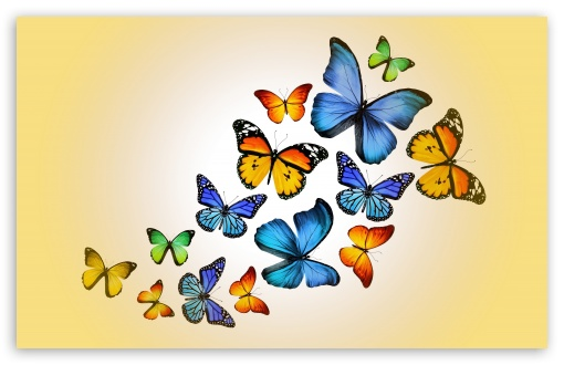 Butterflies ❤ 4K UHD Wallpaper for Wide 16:10 5:3 Widescreen WHXGA WQXGA WUXGA WXGA WGA ; 4K UHD 16:9 Ultra High Definition 2160p 1440p 1080p 900p 720p ; UHD 16:9 2160p 1440p 1080p 900p 720p ; Standard 4:3 5:4 3:2 Fullscreen UXGA XGA SVGA QSXGA SXGA DVGA HVGA HQVGA ( Apple PowerBook G4 iPhone 4 3G 3GS iPod Touch ) ; iPad 1/2/Mini ; Mobile 4:3 5:3 3:2 16:9 5:4 - UXGA XGA SVGA WGA DVGA HVGA HQVGA ( Apple PowerBook G4 iPhone 4 3G 3GS iPod Touch ) 2160p 1440p 1080p 900p 720p QSXGA SXGA ;