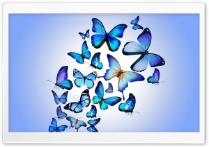 Butterflies HD Wide Wallpaper for Widescreen