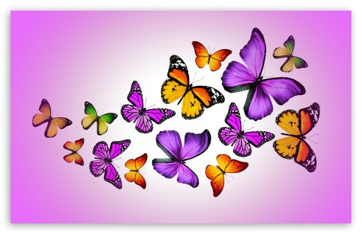 Butterflies ❤ 4K UHD Wallpaper for Wide 16:10 5:3 Widescreen WHXGA WQXGA WUXGA WXGA WGA ; 4K UHD 16:9 Ultra High Definition 2160p 1440p 1080p 900p 720p ; UHD 16:9 2160p 1440p 1080p 900p 720p ; Standard 4:3 3:2 Fullscreen UXGA XGA SVGA DVGA HVGA HQVGA ( Apple PowerBook G4 iPhone 4 3G 3GS iPod Touch ) ; iPad 1/2/Mini ; Mobile 4:3 5:3 3:2 16:9 - UXGA XGA SVGA WGA DVGA HVGA HQVGA ( Apple PowerBook G4 iPhone 4 3G 3GS iPod Touch ) 2160p 1440p 1080p 900p 720p ;