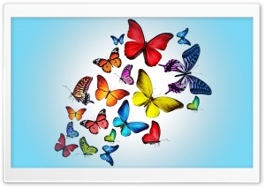 Butterflies HD Wide Wallpaper for 4K UHD Widescreen desktop & smartphone
