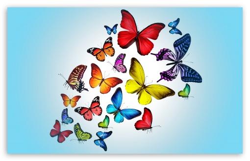 Butterflies Ultra Hd Desktop Background Wallpaper For 4k Uhd Tv Widescreen Ultrawide Desktop Laptop