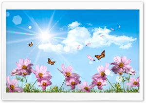 Butterflies And Cosmos Flowers HD Wide Wallpaper for Widescreen