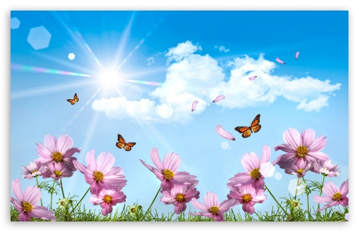 Butterflies And Cosmos Flowers HD wallpaper for Wide 16:10 5:3 Widescreen WHXGA WQXGA WUXGA WXGA WGA ; HD 16:9 High Definition WQHD QWXGA 1080p 900p 720p QHD nHD ; Standard 4:3 5:4 3:2 Fullscreen UXGA XGA SVGA QSXGA SXGA DVGA HVGA HQVGA devices ( Apple PowerBook G4 iPhone 4 3G 3GS iPod Touch ) ; Tablet 1:1 ; iPad 1/2/Mini ; Mobile 4:3 5:3 3:2 16:9 5:4 - UXGA XGA SVGA WGA DVGA HVGA HQVGA devices ( Apple PowerBook G4 iPhone 4 3G 3GS iPod Touch ) WQHD QWXGA 1080p 900p 720p QHD nHD QSXGA SXGA ;