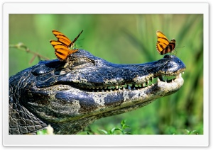 Butterflies Resting On A Caiman, Brazil HD Wide Wallpaper for Widescreen