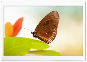 Butterfly 1 HD Wide Wallpaper for Widescreen